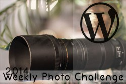 Cheri's weekly wordpress photo challenge