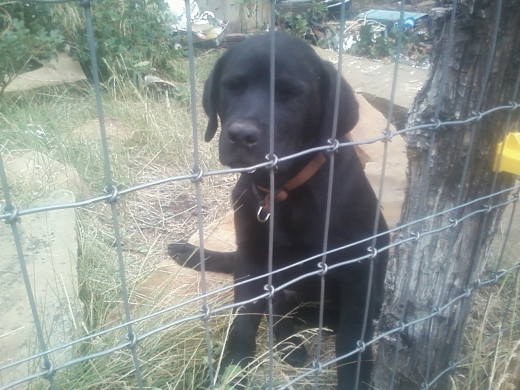 Jake Behind da' fence