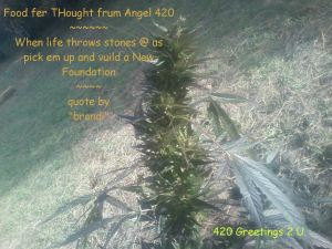 qngel_420_thoughts