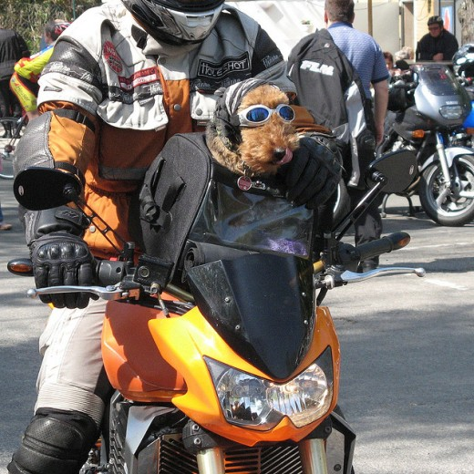 another bikerdog @ da' rallye