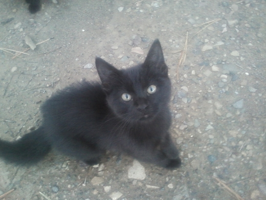 itty_kitty