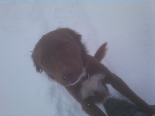 Yes Missy New Snow Again this Year