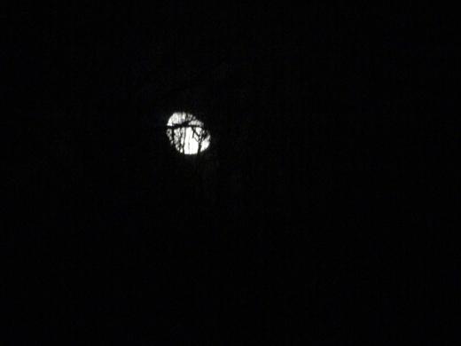 moontreed