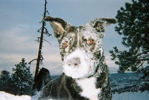 sash-snow-2
