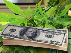cannabis-money