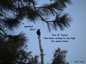 da early bird on me tree in frt yard almost daily still