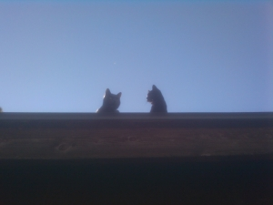 2 kitties on top of the werld!