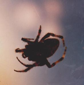 Springtime spider @ Q's Place!