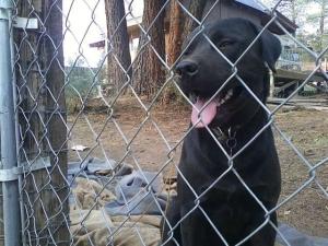 cageddog