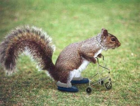 Funnysquirrel