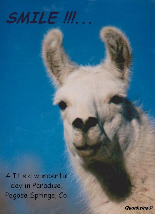 kissme_llama_by_Quarksire