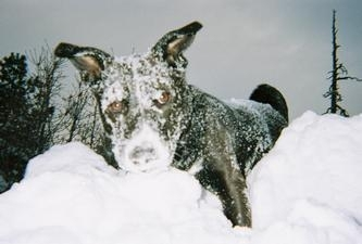 sash-snow