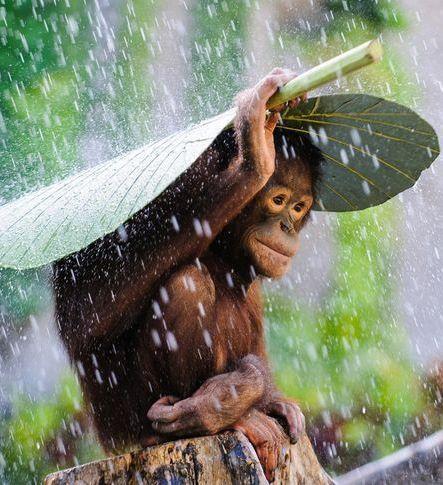 orangutange.jpg